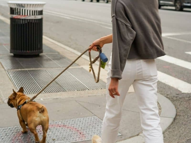 a person walking a dog on the street